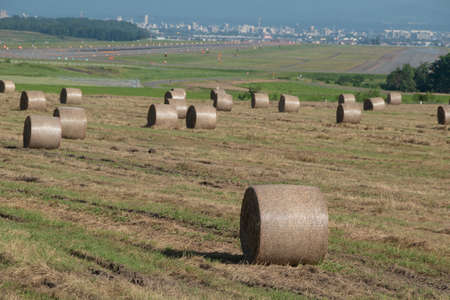 Grass rolls on meadow and airfield