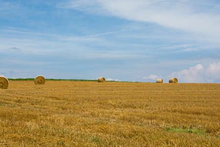 Wheat rolls in the field after mowing with blue sky Stock fotó