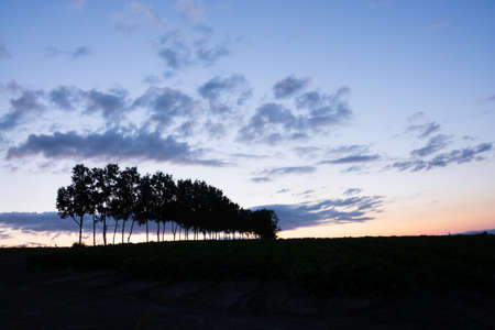 Beautiful twilight sky with birch tree silhouette