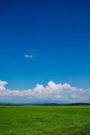 Summer green meadow and blue sky