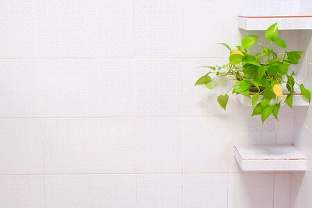 Green trees on a multipurpose shelf But should clean the bathroom wall Banque d'images