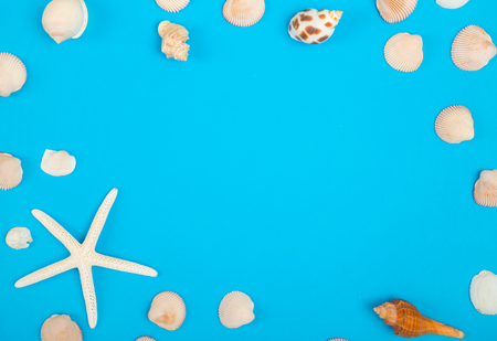 frame of seashell with copy space on colorful background,  Sea flat lay, tropical and aloha travel concept.