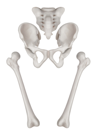 Separate Human bones of Hip and Lower limb- Healthcare-Human Anatomy and Medical concept-Isolated on white background. Archivio Fotografico - 99692495
