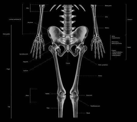 Infographic diagram of lower half human skeleton anatomy system anterior view- 3D- Human Anatomy- Medical Diagram- educational and Human Body concept- black and white x-ray color film