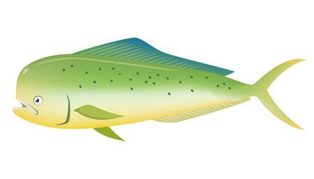 Image illustration of Shiira (sea creature)