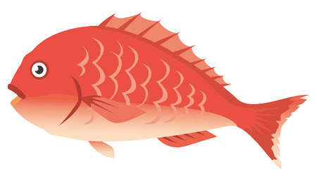 Image illustration of sea fish (sea bream)