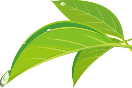 Image illustration of a drop of water that seems to fall from a leaf  イラスト・ベクター素材