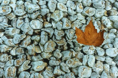 Bluish-green pebbles stained with silt on  the pool. A yellow autumn leaf floats. Foto de archivo