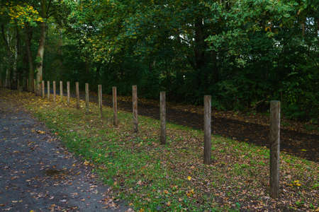 Wooden posts separating paths in the park. Autumn, yellow foliage on the ground.