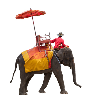 Elephant for tourists ride tour of the ancient city in Ayutthaya Thailand. isolated on white background with clipping path 스톡 콘텐츠