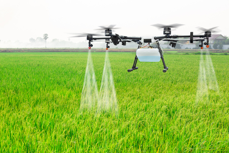 Agriculture drone fly to sprayed fertilizer on the rice fields