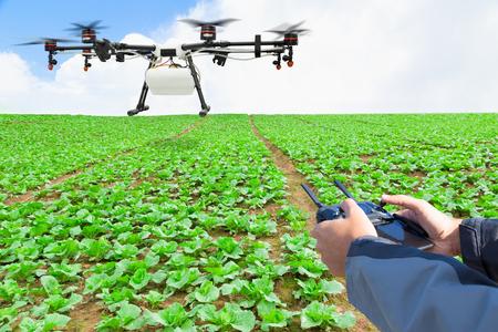 Los granjeros controlan la mosca no tripulada de la agricultura al fertilizante rociado en el campo de la lechuga Foto de archivo