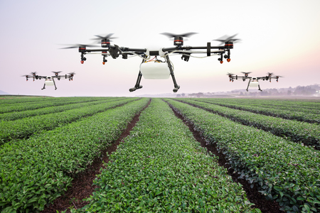 Agriculture drone flying on the green tea field at sunrise Foto de archivo