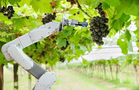 Assistant de robot agricole récoltant des raisins pour analyser la croissance du raisin, concept de ferme intelligente