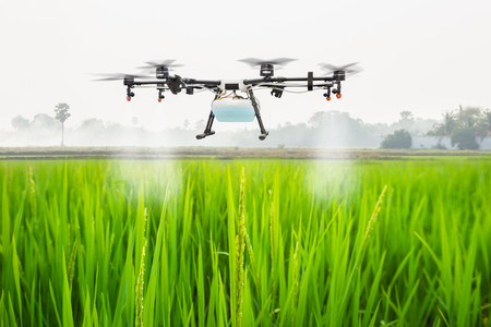 Agriculture drone fly to sprayed fertilizer on the rice fields, Smart farm concept