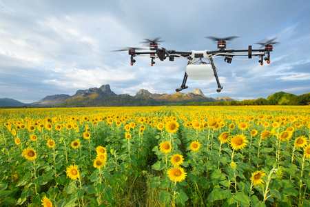 Agriculture drone flying on the sunflower field, Smart farm concept Imagens - 120583841