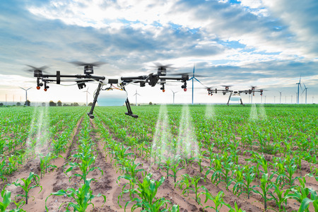 Agriculture drone fly to sprayed fertilizer on the corn fields