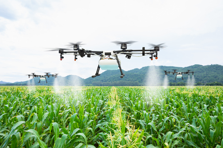 Agriculture drone fly to sprayed fertilizer on the sweet corn fields Stockfoto