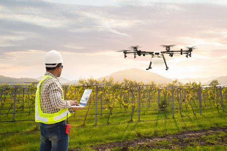 Technician farmer use wifi computer control agriculture drone fly to sprayed fertilizer on grape field, Smart farm concept Reklamní fotografie