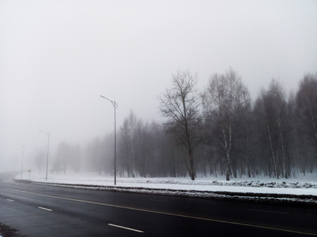 Forest in the road is all in a fog.