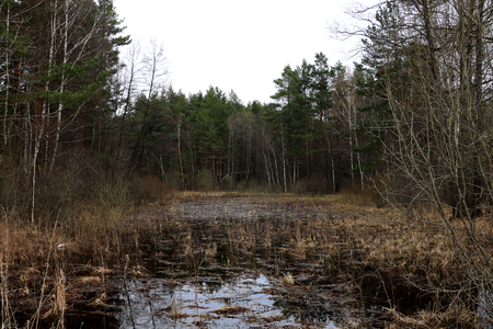 a small overgrown lake in the old forest.