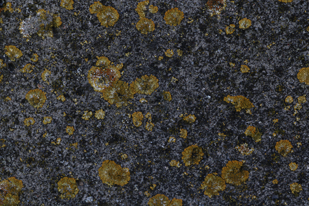 texture of gray concrete covered with moss.