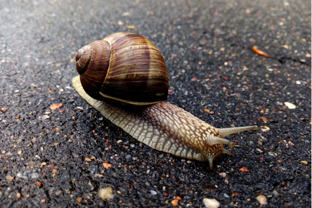 Beautiful snail on the road after the rain 스톡 콘텐츠