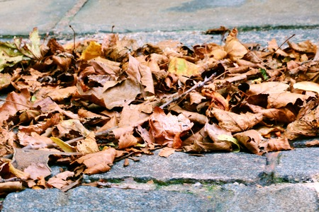 Yellow dry foliage in autumn on paving slabs in New York, background