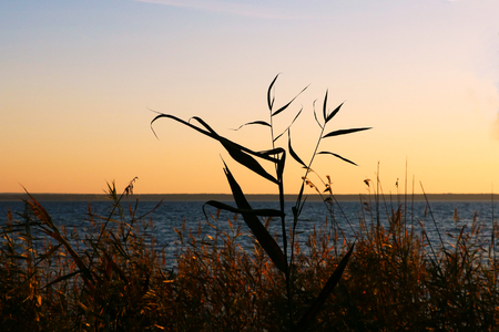 Forest lake shore, overgrown with reeds on an autumn morning during sunset or sunrise. Stock Photo