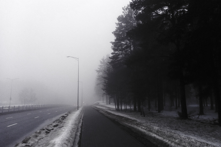 An asphalt road that goes through a misty dark misterious pine forest. French Alsace Stockfoto