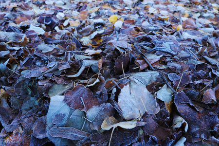 Frozen leaves on grass, ground frost on the morning field, early winter, background