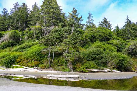 Beach landscape in Olympic National Park, Washington, USA