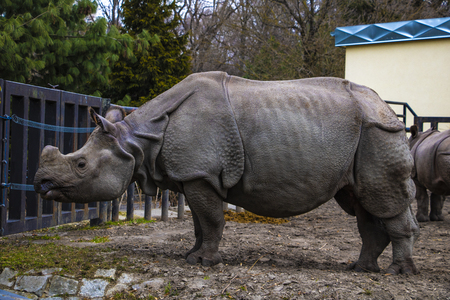 View of a large rhino in the park for a walk Reklamní fotografie