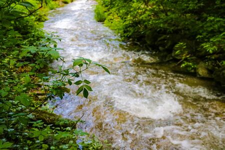 Mountain river flowing through the green forest Фото со стока