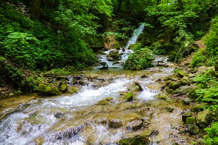 Mountain river flowing through the green forest 版權商用圖片