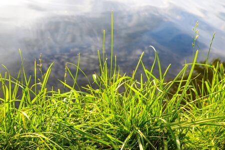 Fondo de naturaleza hermosa, puesta de sol. Hierba de verano. Naturaleza salvaje. Dios. Rayos de sol Fondo mágico Foto de archivo