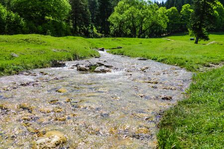 A small mountain stream with cold water flows surrounded by large green trees, nature background. Фото со стока - 131339349
