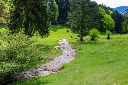 A small mountain stream with cold water flows surrounded by large green trees, nature background Фото со стока - 131339360