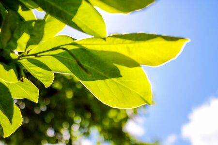 Young green branch with leaves on a background of blue sky