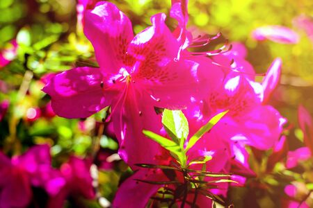 Beautiful tiny tropical flowers in botanical garden, closeup 写真素材