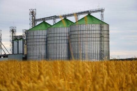 Group of grain dryers complex on the background of a yellow field of wheat or barley