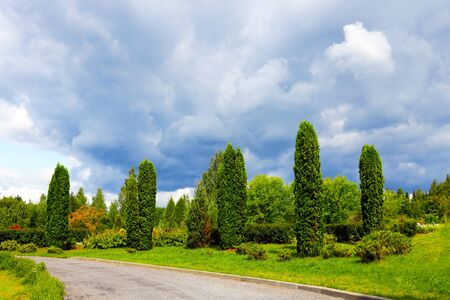 Beautiful park with green thuja, nature photo Banco de Imagens