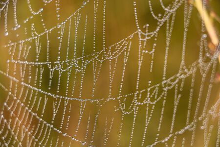 After the rain, the hidden beauty of this cobweb appears. Selective focus