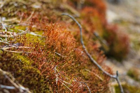 Beautiful moss in the spring or summer forest. Selective focus Banque d'images