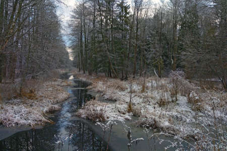 A small river flows through the forest in late autumn