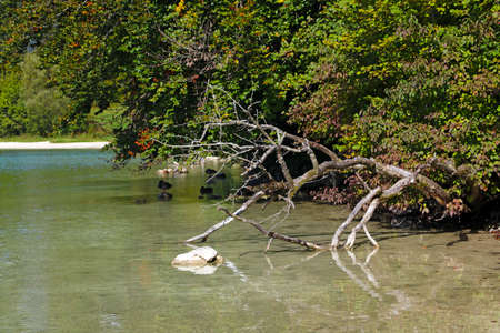 A small dry tree lies in clear water