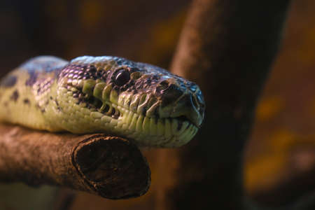 Close-up of a snake that lies on a tree
