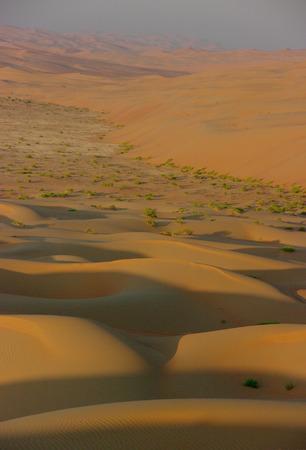 wilds: The Arabian wilds