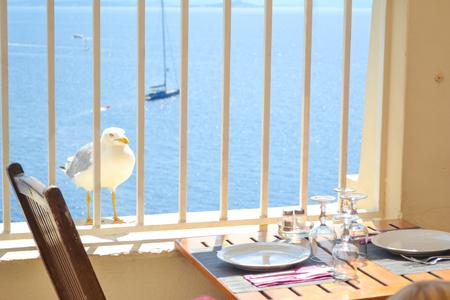 white seagull bird near the table of a restaurant Sea beach Reklamní fotografie