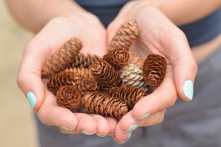 Girl with manicure in the forest of Canada holds a handful of pine cones Stock Photo